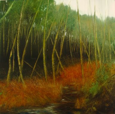 Thicket Of Birch Near Coast picture